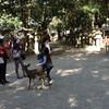 奈良公園 遊歩道から春日大社へ
