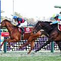 【アメリカJCC 2018】予想オッズと出走予定馬とデータ分析といろいろ考察する。
