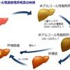 非アルコール性脂肪性肝疾患