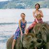 今日も南国ビーチで象さんと海水浴