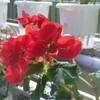 温室の花々