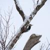 野鳥日記 2020年2月20日 野幌森林公園