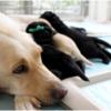 ペットの8週齢規制を国に先駆けて札幌市が条例化。