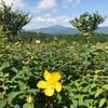 筑波山、足尾山、加波山風景