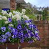 イギリスの素敵コンテナを解説します。園芸店をまわりました:チェルシーフラワーショー滞在日記3回目、その8