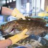 2017年11月2日 小浜漁港 お魚情報