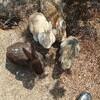 大久野島でウサギ見てきたからメモ書き、あとウサギの可愛い写真