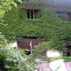 まるでRPG!森に埋もれる廃墟ホテル