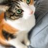 【愛猫日記】毎日アンヌさん#130