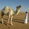 バイデン氏当選が世界に与える影響 - サウジアラビア
