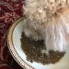 「犬のごはん」手作り食からドッグフードへ変えてみました