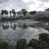 高田公園の桜を見物したら学びがいっぱいだった やはり大物YouTuberの影響力は図りしれない