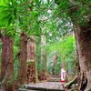 超定番!熊野古道の大門坂~那智の滝へのよりどりコース