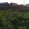 太陽光のパネル洗浄したり、除草剤を撒いた一日