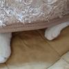 今日の黒猫モモ&黒白猫ナナの動画ー856