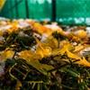 【一日一枚写真】秋と冬の間【一眼レフ】