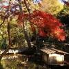 根津美術館の紅葉 鏨の華
