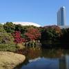 東京小石川後楽園『深山紅葉を楽しむ』