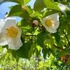 都立農林総合試験センターの晩春の花々