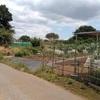 【野菜づくり】駅から歩けるシェア畑、始めてみました