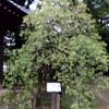 徐々に奇妙な公園「哲学堂公園」に行ってきました。その2