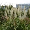 ミモザ・ガーデンの日記 和風の庭飾り