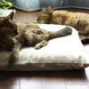 猫と自傷行為