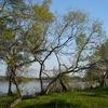 琵琶湖への愛を語りたい