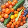 庭の家庭菜園、この夏もミニトマト大漁!きゅうりはブランドものがおすすめ。