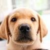 犬・猫の総合情報サイト【PEPPY(ペピイ)】でおトクにお買い物!ポイントサイト経由!