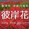 ジョギングで季節の花を愛でる│津屋川堤防の彼岸花