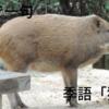 俳句で一句 季語「猪鍋」