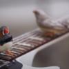 エレクトリックギターを奏でる鳥たち - 少しだけ違った日常を垣間見せる