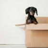 家賃を節約するために引越しをするのは効果的なのかを解説します。