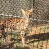 多摩動物公園に行ってきたよ!
