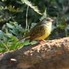 明治神宮の小鳥たち