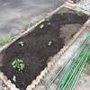 #1 夏野菜'19 植え付け