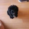 コタロー(愛犬)の紹介