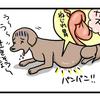 おなかが急に膨らむ病気--胃拡張胃捻転