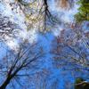 青く澄みたる空の下 木々は囁く風と戯れ