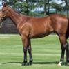 シルク15年産一口初心者全馬評価33 ペンカナプリンセスの15