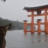 広島一人旅(おまけ)台風上陸寸前の宮島を歩いてきた。