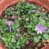 花が増えてきました^ ^