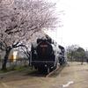 D51と桜