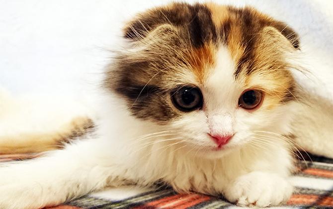 かわいさ悶絶級!! スマホでかわいい猫をさらにかわいく撮影するプロの技、教えます