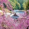 大縣神社の梅まつりに行ってきたよ。初めて梅見てよかったって思えたわ。