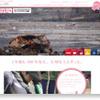 【震災】桜ライン311の報告会に行ってきました