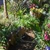 今朝の庭にて