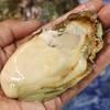 夏の料理 『天然岩牡蠣』