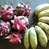 ドラゴンフルーツとブラジルバナナいただきました&サブブログ開設